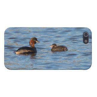 Pequeño Grebe y polluelo iPhone 5 Funda