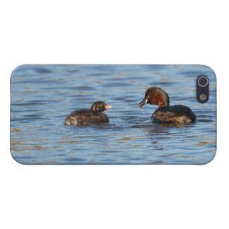 Pequeño Grebe y polluelo iPhone 5 Fundas