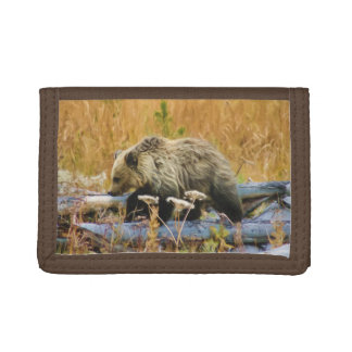 Pequeño oso grizzly Cub del explorador