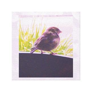 Pequeño pájaro Australia Lienzo