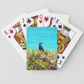 Pequeño pájaro negro lindo barajas de cartas
