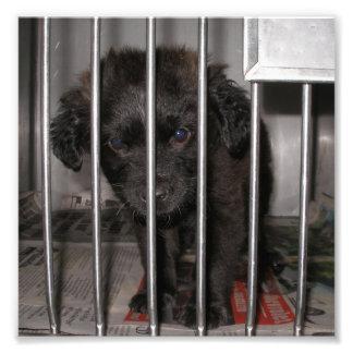Pequeño perrito negro en una jaula fotografías