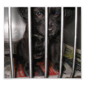 Pequeño perrito negro en una perrera fotografias