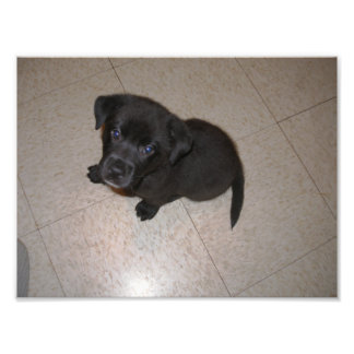 Pequeño perrito negro que mira para arriba foto