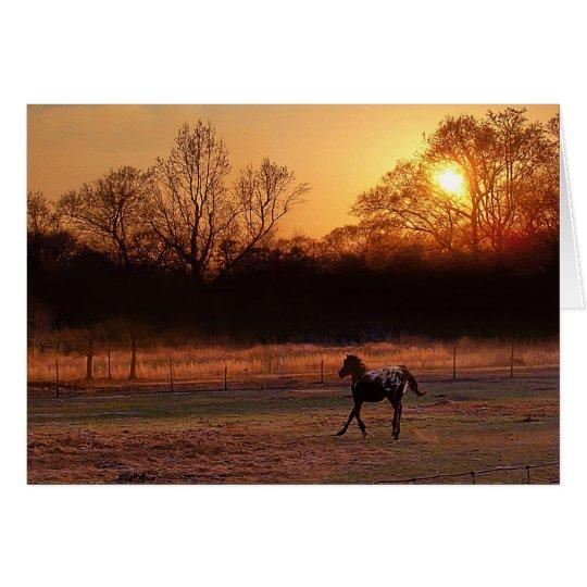 Pequeño semental en la puesta del sol tarjeta de felicitación