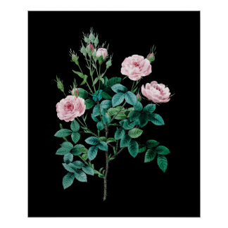 Pequeños rosas rosados del poste negro del fondo póster