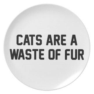 Pérdida de los gatos de piel plato