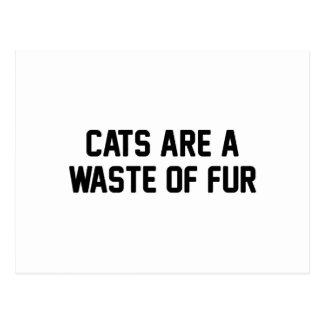 Pérdida de los gatos de piel postal