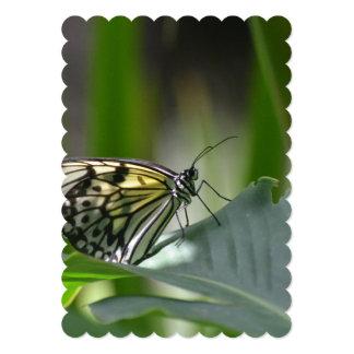 Perfección de la mariposa comunicados personales