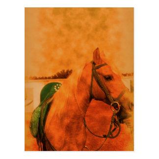 Perfil árabe de la yegua postal