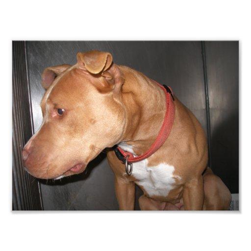 Perfil de un perro del moreno en una jaula arte con fotos