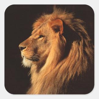 Perfil del león masculino africano - pegatinas pegatina cuadradas personalizada