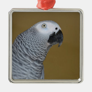 Perfil del loro del gris africano adorno cuadrado plateado