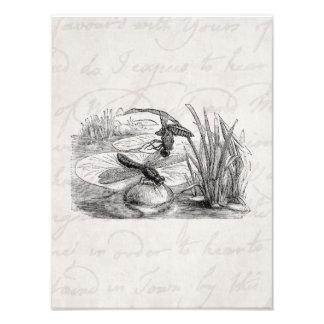 Pergamino de las libélulas de la antigüedad de la impresión fotográfica