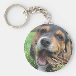 Perrito adorable del beagle que mastica en la llavero redondo tipo chapa
