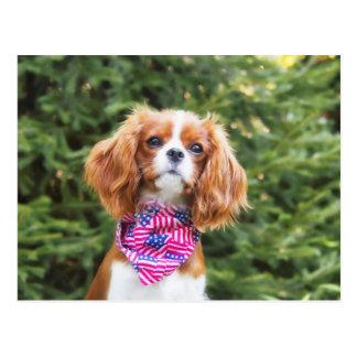 Perrito arrogante orgulloso del perro de aguas de postal