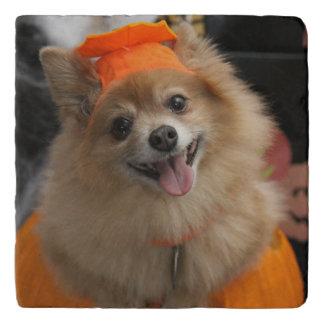 Perrito astuto sonriente de Pomeranian en la Salvamanteles