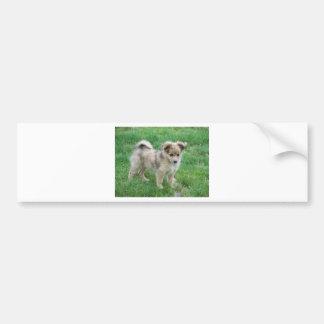 Perrito australiano del pastor pegatina para coche