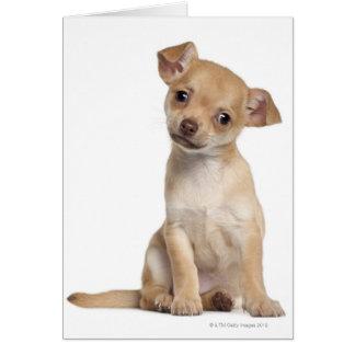 Perrito de la chihuahua (2 meses) tarjeta de felicitación