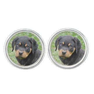 Perrito de McDogface Rottweiler del perrito Gemelos