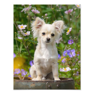Perrito de pelo largo lindo del perro de la cojinete