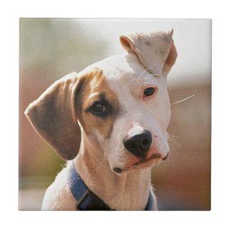 Perrito del beagle azulejo cuadrado pequeño