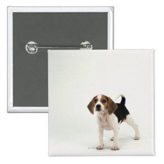 Perrito del beagle chapa cuadrada