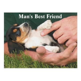 Perrito del beagle del mejor amigo del hombre postal