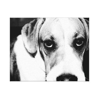 Perrito del beagle en blanco y negro lienzo