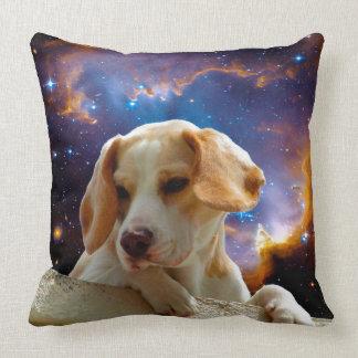 perrito del beagle en la pared que mira el almohadas