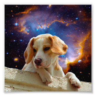 perrito del beagle en la pared que mira el impresiones fotograficas