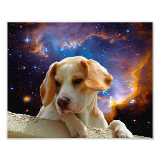 perrito del beagle en la pared que mira el cojinete