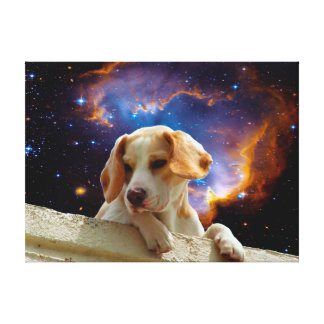 perrito del beagle en la pared que mira el impresión en lienzo estirada