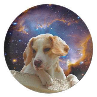 perrito del beagle en la pared que mira el plato para fiesta