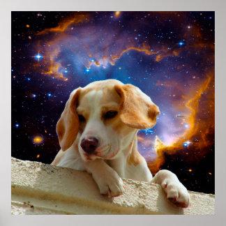 perrito del beagle en la pared que mira el póster