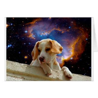 perrito del beagle en la pared que mira el tarjeta de felicitación
