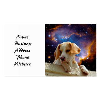 perrito del beagle en la pared que mira el
