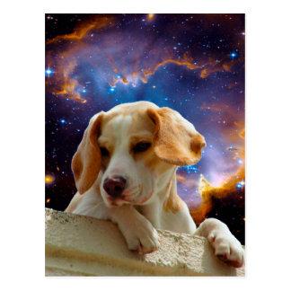 perrito del beagle en la pared que mira el postal