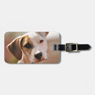 Perrito del beagle etiquetas bolsas