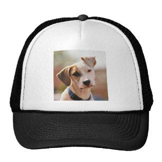 Perrito del beagle gorro de camionero