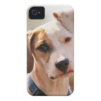 Perrito del beagle iPhone 4 Case-Mate coberturas