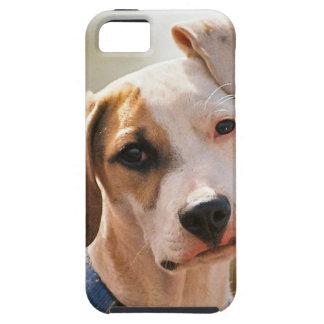 Perrito del beagle iPhone 5 cárcasas