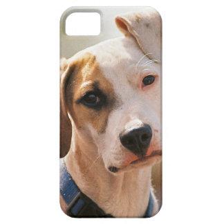 Perrito del beagle iPhone 5 cobertura