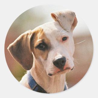 Perrito del beagle pegatina redonda