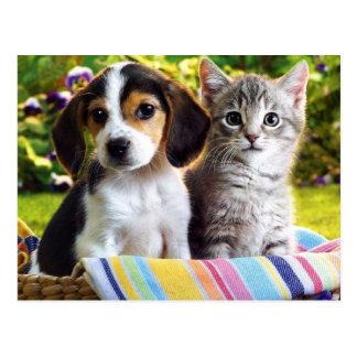 Perrito del beagle y gatito gris postal