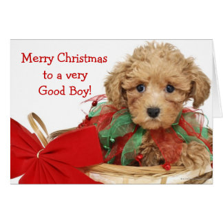 Perrito del caniche que se sienta en cesta del tarjeta de felicitación