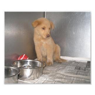 Perrito del golden retriever en una jaula impresión fotográfica