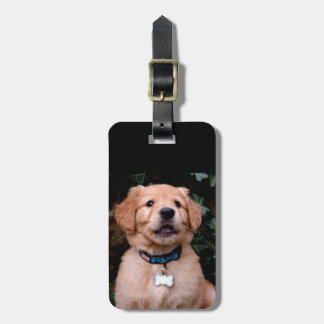 Perrito del golden retriever etiquetas para maletas