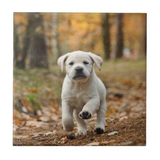 Perrito del labrador retriever azulejo cuadrado pequeño