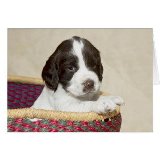 Perrito del perro de aguas de saltador tarjeta